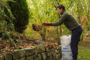 aranżacja ogrodów wrocław